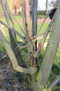 Expertmeeting boomziekten